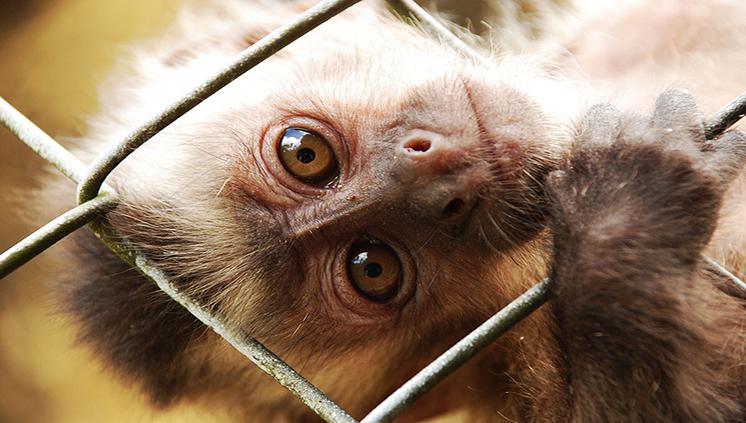 Inscrições abertas para seleção da Pós-Graduação em Reprodução Animal na Amazônia